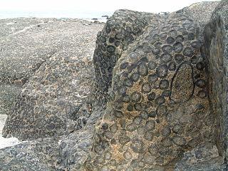 320px 2005.11.08 005 granito orbicular caldera chile