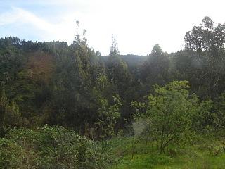 320px stgo forest