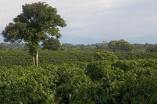 320px cafe quimbaya 2005 08 27