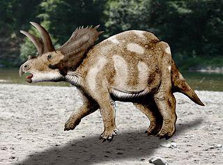 320px coahuilaceratops nt